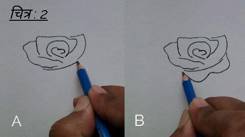 गुलाब के फूल की ड्राइंग