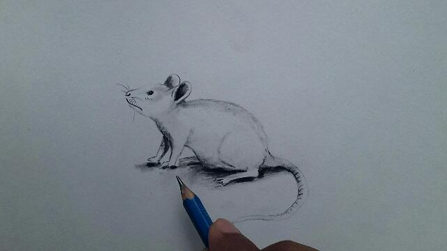 चूहे का चित्र